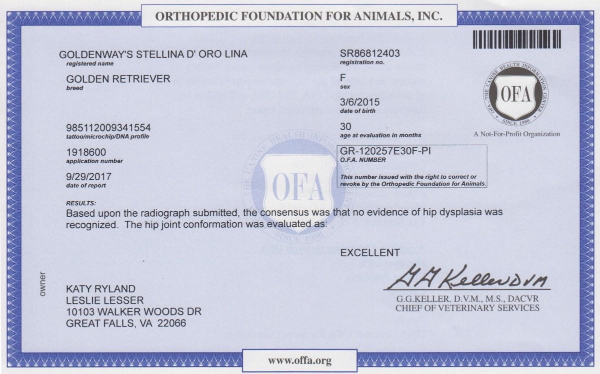 Lina's Hip Certification